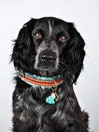 De unieke halsbanden van Dog With a Mission