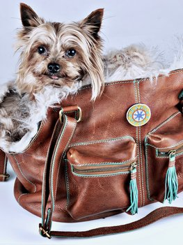 Dog With A Mission Hipster Bag Blondie