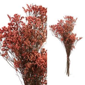 PTMD Droogbloemen Pink Naturel Bush